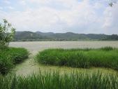 Upo Wetlands (3)